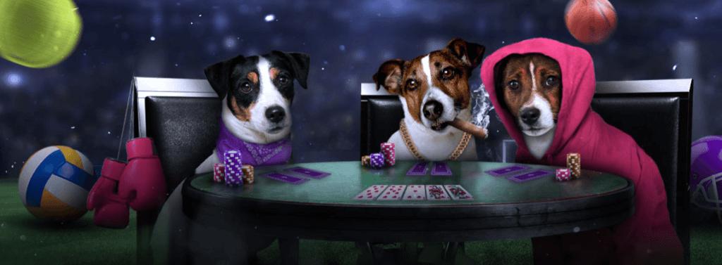 Yobetit Casino Erfahrungen